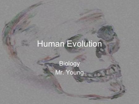 Human Evolution Biology Mr. Young. Paleoanthropologist Scientist that studies human evolution from fossils.
