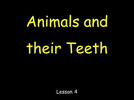 Animals and their Teeth Lesson 4. Study these animals and look at their teeth if you can !!!