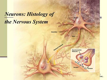 1 Copyright © 2007 Pearson Prentice Hall, Inc. Neurons: Histology of the Nervous System.