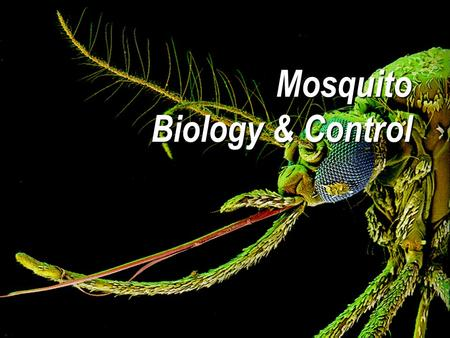 Mosquito Biology & Control