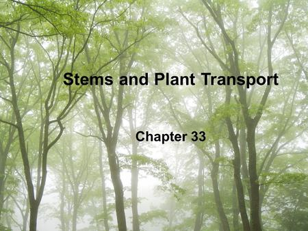 Stems and Plant Transport Chapter 33. Stem Functions Support leaves and reproductive structures –Allow leaves to absorb sunlight needed for photosynthesis.