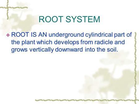 ROOT SYSTEM  ROOT IS AN underground cylindrical part of the plant which develops from radicle and grows vertically downward into the soil.