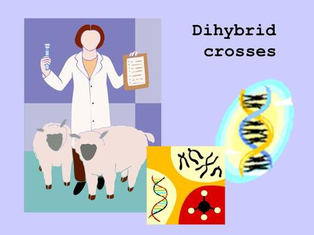Dihybrid crosses. In Monohybrid crosses we predicted the probability of inheriting one trait. If the probability of inheriting one trait can be predicted,