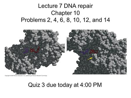 Lecture 7 DNA repair Chapter 10 Problems 2, 4, 6, 8, 10, 12, and 14 Quiz 3 due today at 4:00 PM.