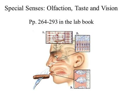 Special Senses: Olfaction, Taste and Vision Pp. 264-293 in the lab book.