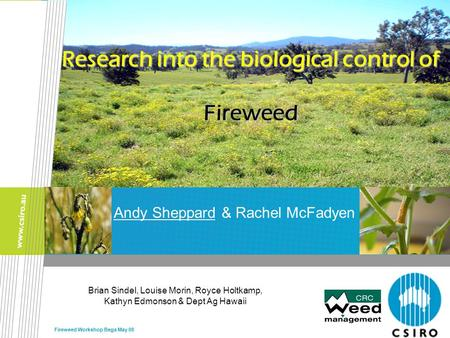 Fireweed Workshop Bega May 08 Andy Sheppard & Rachel McFadyen Research into the biological control of Fireweed Brian Sindel, Louise Morin, Royce Holtkamp,