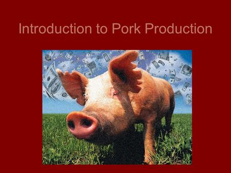 Introduction to Pork Production. Definitions Female after giving birth: Sow Young female: Gilt Having piglets: Farrowing Male: Boar Castrated Male: Barrow.