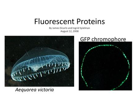 Fluorescent Proteins By James Dicarlo and Ingrid Spielman August 12, 2008 Aequorea victoria GFP chromophore.