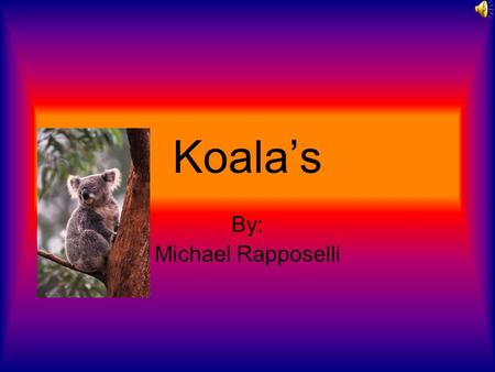 Koala's By: Michael Rapposelli Introduction What animal is almost as slow as a sloth and is a mammal? A koala of course! Read this report and find out.