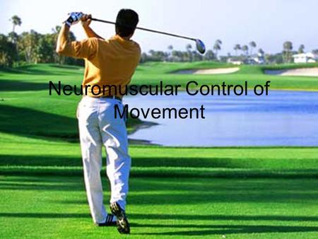 Neuromuscular Control of Movement. Organization of Brain Motor Centers.
