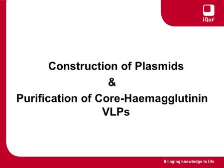 Construction of Plasmids & Purification of Core-Haemagglutinin VLPs.