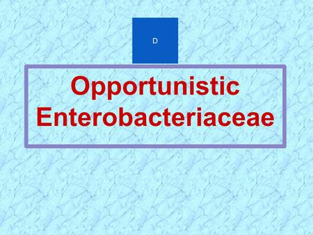 Opportunistic Enterobacteriaceae D. OPPORTUNISTIC INFECTIONS OF ENTEROBACTERIACEAE  GRAM NEGATIVE SEPSIS  URINARY TRACT INFECTIONS  PNEUMONIA  ABDOMINAL.