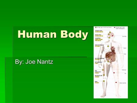 Human Body By: Joe Nantz. The Brain  How does the brain work?  The brain is made up of 100 billion neurons.  There are a lot of parts that make up.