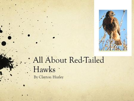 All About Red-Tailed Hawks By Clayton Hurley. Brief Description The Red Tailed Hawks are white and brown and gray and gold Their wing span is 4 feet long.