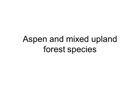Aspen and mixed upland forest species. big-leaved aster Aster macrophyllus Large variability in leaf size Either big single leaf or aster flower Rough.