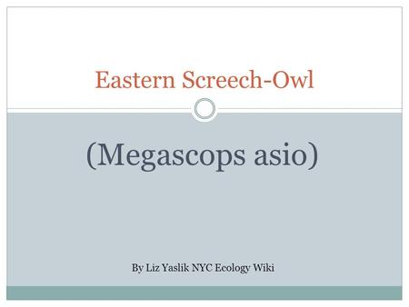 Eastern Screech-Owl (Megascops asio) By Liz Yaslik NYC Ecology Wiki.