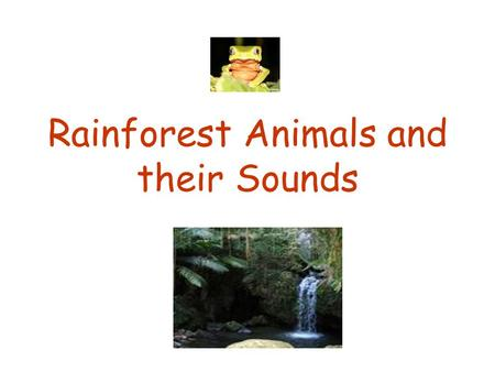 Rainforest Animals and their Sounds. Cockatoo  Cockatoos are a tropical bird They eat nuts from.