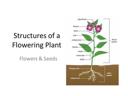 Structures of a Flowering Plant Flowers & Seeds. Link 3 fast things about flowers.