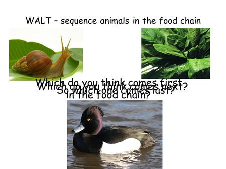 WALT – sequence animals in the food chain Which do you think comes first in the food chain? Which do you think comes next? So which one comes last?