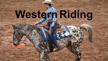 Western Riding. The western riding begins by dressage and respect for the animal.