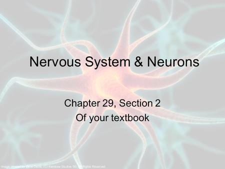 Nervous System & Neurons