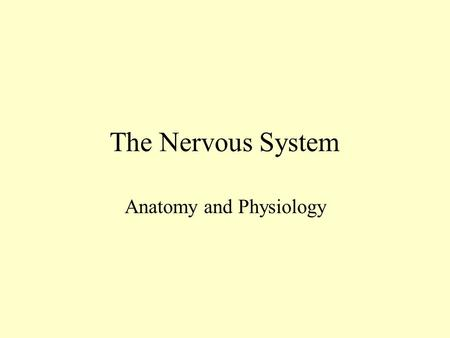 The Nervous System Anatomy and Physiology Nervous System Functions 1. Sensory-receptors gather information and pass it on toward the CNS 2. Integrative-in.