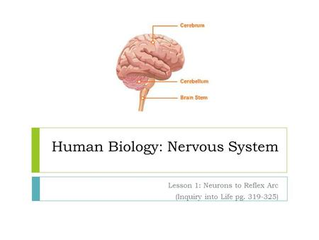 Human Biology: Nervous System Lesson 1: Neurons to Reflex Arc (Inquiry into Life pg. 319-325)