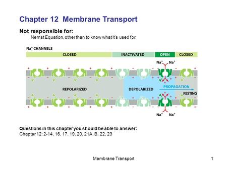 Membrane Transport1 Not responsible for: Nernst Equation, other than to know what it's used for. Chapter 12 Membrane Transport Questions in this chapter.