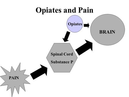 Opiates and Pain PAIN Spinal Cord Substance P BRAIN Opiates.