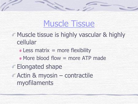 Muscle Tissue Muscle tissue is highly vascular & highly cellular Less matrix = more flexibility More blood flow = more ATP made Elongated shape Actin &
