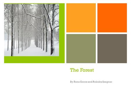+ The Forest By Rene Koncz and Rebeka Szegner + The Forest A forest Is a large Area Covered Primanily By trees And undergrowth.
