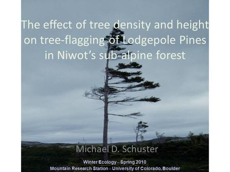 The effect of tree density and height on tree-flagging of Lodgepole Pines in Niwot's sub-alpine forest Michael D. Schuster Winter Ecology – Spring 2010.