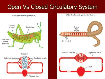 Open Vs Closed Circulatory System