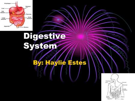 Digestive System By: Haylie Estes Mouth Mouth the opening of the lower part of the humans face.