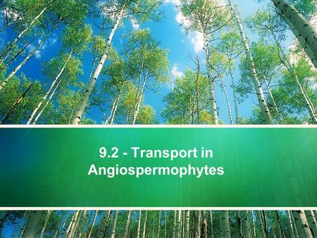 9.2 - Transport in Angiospermophytes. Transport in Angiospermophytes.