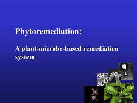 Phytoremediation: A plant-microbe-based remediation system.