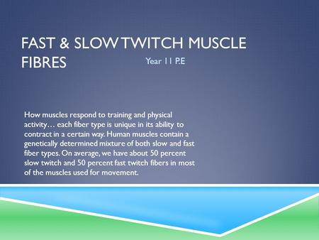 FAST & SLOW TWITCH MUSCLE FIBRES Year 11 P.E How muscles respond to training and physical activity… each fiber type is unique in its ability to contract.