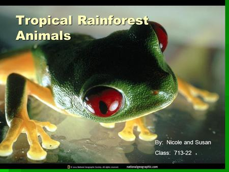 Tropical Rainforest Animals By: Nicole and Susan Class: 713-22.