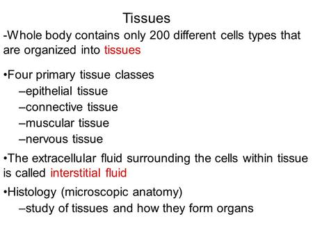 Tissues -Whole body contains only 200 different cells types that are organized into tissues Four primary tissue classes –epithelial tissue –connective.