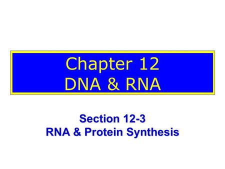 Chapter 12 DNA & RNA Section 12-3 RNA & Protein Synthesis.