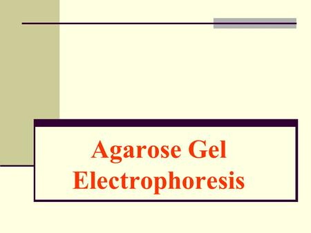 Agarose Gel Electrophoresis. Purposes To understand the principle of Gel electrophoresis To become familiar with the part of the electrophoresis setup.