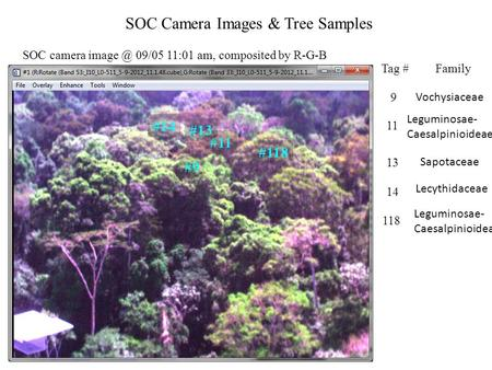 #9 #118 #11 #13 #14 SOC Camera Images & Tree Samples SOC camera 09/05 11:01 am, composited by R-G-B Tag #Family 9 Vochysiaceae 11 Leguminosae-