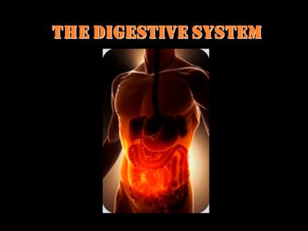 The Digestive System. What is the job of the Digestive System? To help get nutrients into the blood stream to travel to all cells. The digestive system.