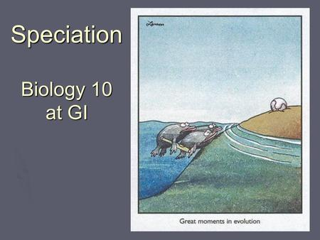 Speciation Biology 10 at GI Biology 11. Speciation  The development of a new species  Usually the result of reproductive isolation How does this occur?