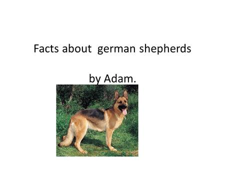 Facts about german shepherds by Adam. A female shepherd gives birth to a litter of puppies. Shepherd puppies are playful and grow quickly.