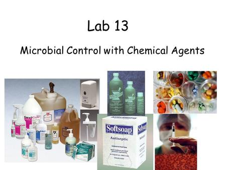 Lab 13 Microbial Control with Chemical Agents. Staphylococcus aureus 1 2 3 4 Escherichia coli Do all disinfectants and antiseptics work equally well against.