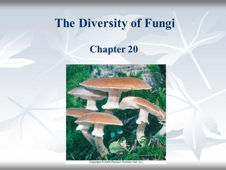 The Diversity of Fungi Chapter 20.