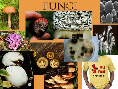 FUNGI. Plants vs. Fungi Plants have chlorophyll and photosynthesize, fungi do not Plants have roots, leaves, and stems, fungi do not Plant cell walls.