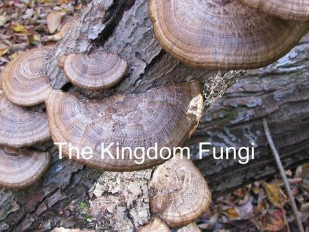 The Kingdom Fungi.