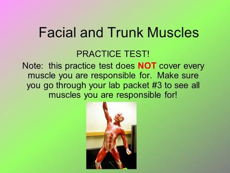 Facial and Trunk Muscles PRACTICE TEST! Note: this practice test does NOT cover every muscle you are responsible for. Make sure you go through your lab.